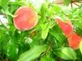 bahçemizden_new